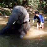 elephant-bathing