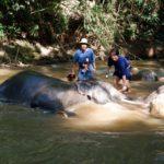 elephant-bathing2