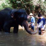 elephant-bathing3