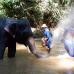 elephant-bathing4