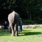 elephant-lecture