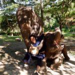 elephant-photo-session