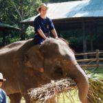 elephant-riding-food