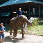 elephant-riding-food2