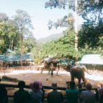 elephant-show