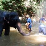 elephant-splashing-water