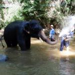 elephant-splashing-water2