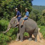 elephant-trecking