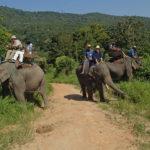 elephant-with-tourists