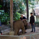 play-with-baby-elephant